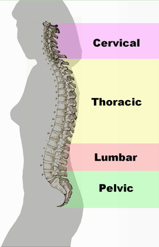 Posture and Spine Treatments - Bodyworks Subiaco